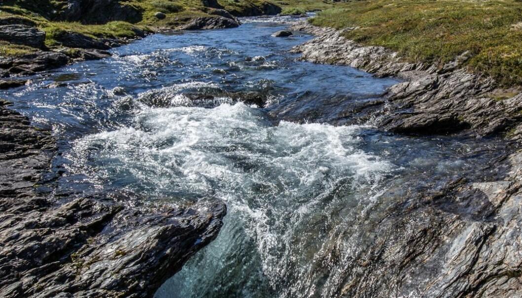 Foto:Per Fjordvang