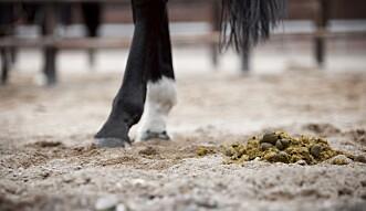 ENERGIKILDE: Hestemøkk kan være energikilde i stedet for miljøproblem.