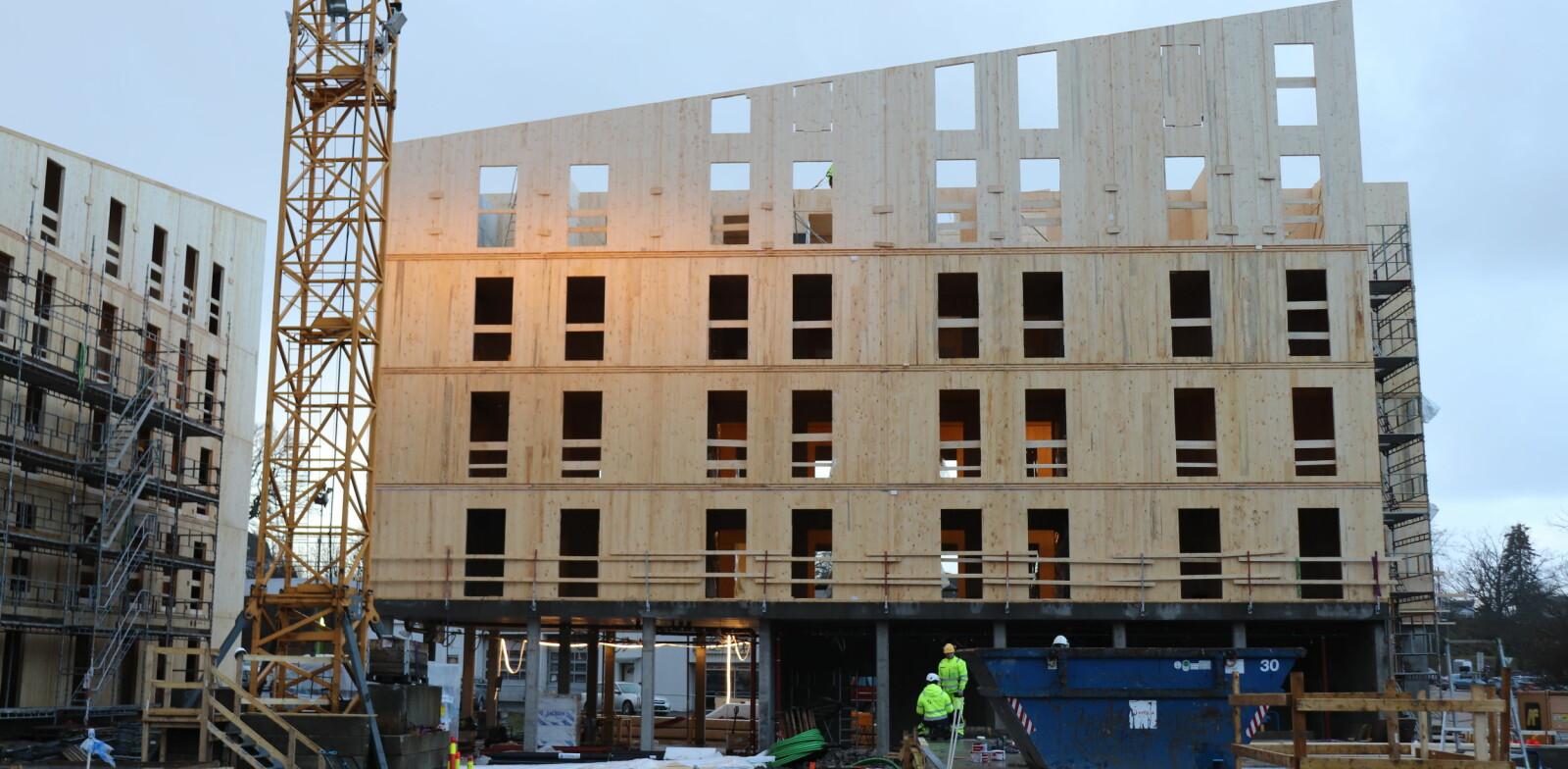 Det bygges 230 nye studentboliger i massivtre i Fredrikstad for Studentsamskipnaden i Østfold.